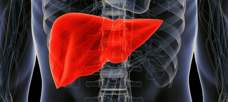 Human Liver | INSULEAN