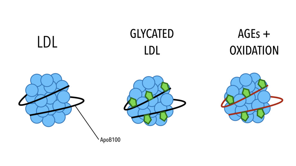 Glycated LDL INSULEAN