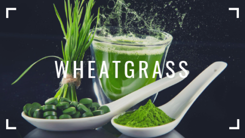 WHEATGRASS – for Weight Loss?
