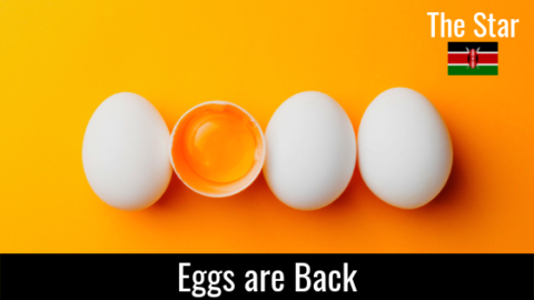Eggs are Back